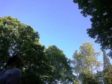 Blå toner mot blå himmel. Det blir inte mycket somrigare än så.